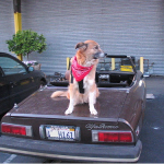 Dogs and Old Cars: Why Both Are Worthy Of Being Man's Best Friend