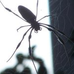 4 Things Every Homeowner Should Look for in a Pest Control Company
